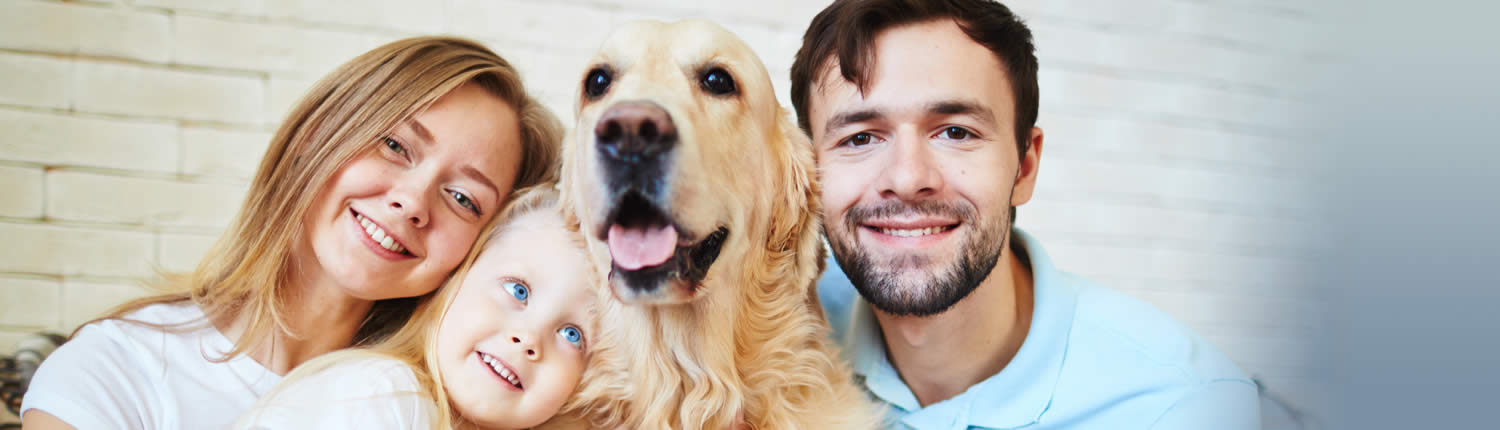 Pets and indoor air quality Apex Heating and Air Conditioning